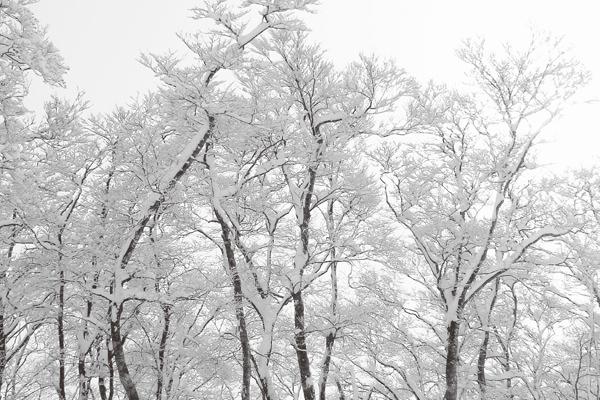 木村善明バリトンリサイタル2014 冬の旅